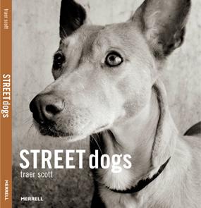 Street dogs - Traer Scott