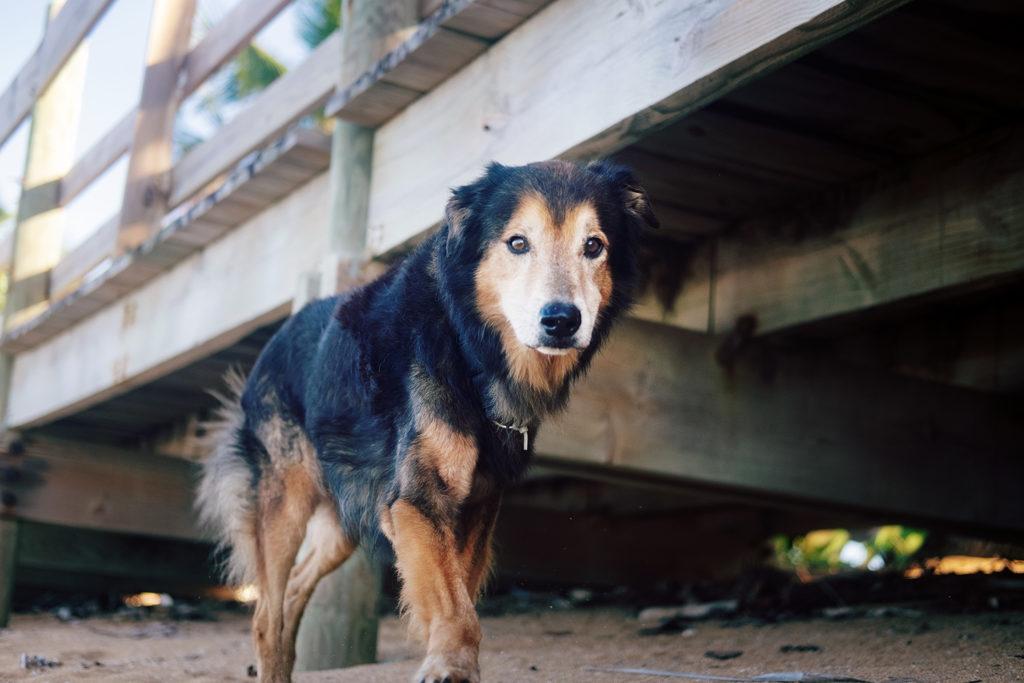 Sasha Boardwalk